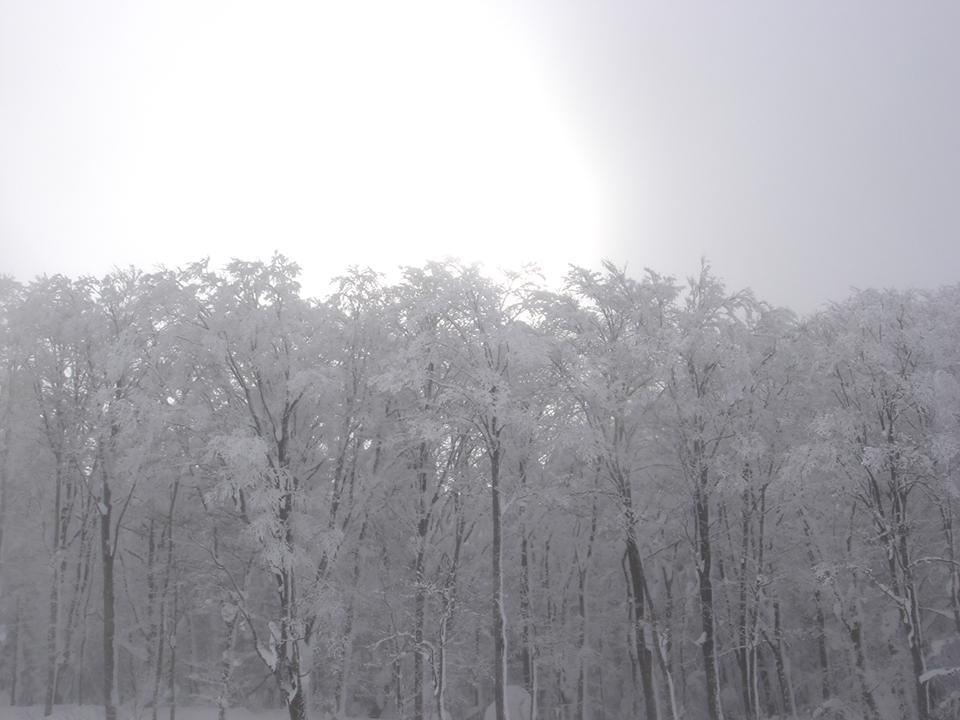 雪化粧.jpg